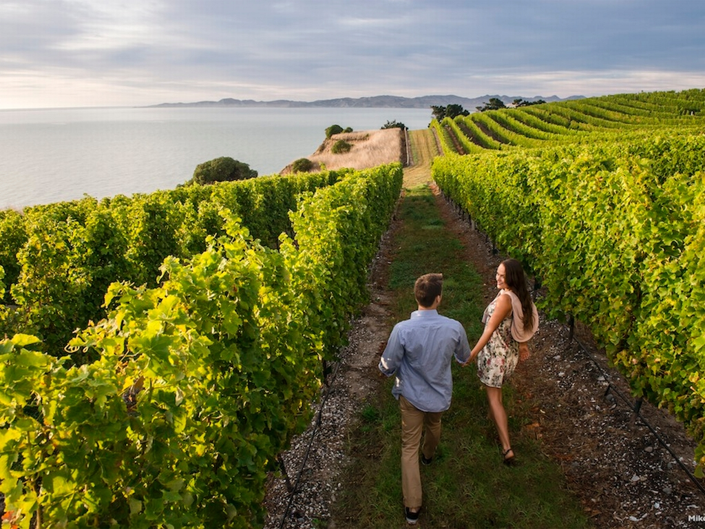 follow-the-wine-trail