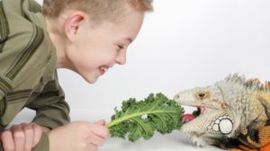 Exotic pets benefit from specialist care