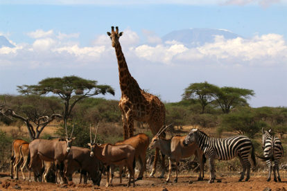 Jacada - Kenya holiday ideas