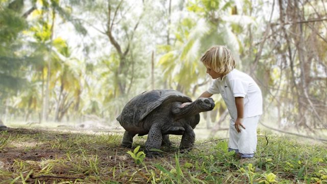 image of boy on islands holiday in the Seychelles